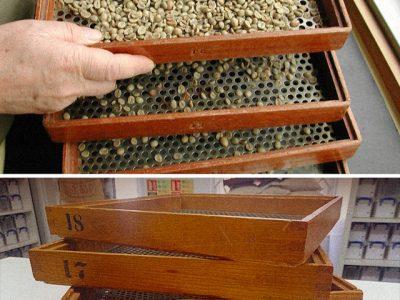 Phân loại kích thước hạt cà phê